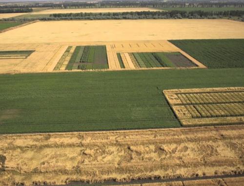 Land plots in Chernivtsi regions
